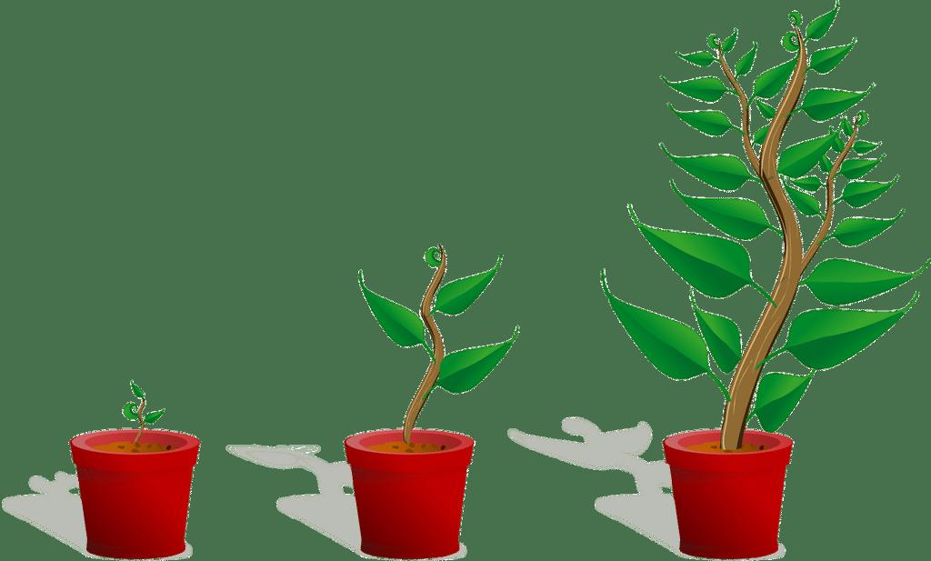 Débuter la croissance de son activité