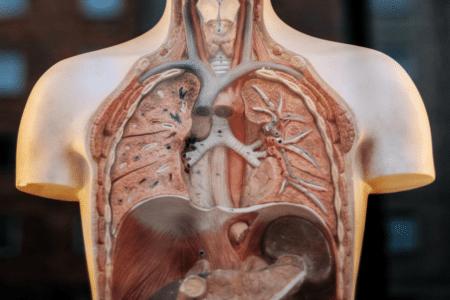 Naturopathie et étude de la physiologie