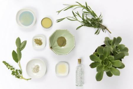 Naturopathie : Étude des plantes