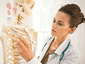 étude de l'anatomie pour les massages