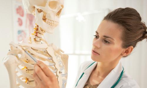 apprendre anatomie esthétique